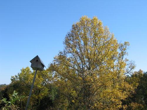 Stuga, autumn,halloween,cooking outside 139