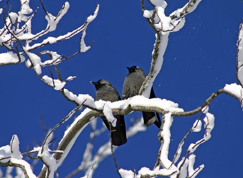 Birdwatch4