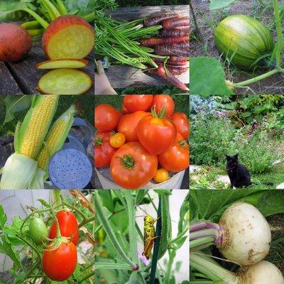 Garden collage 3