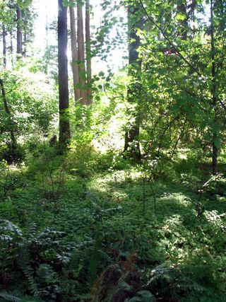 Garden,funeral,portland,hood river_0918_edited-1