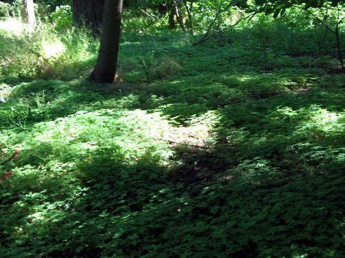 Garden,funeral,portland,hood river_0931_edited-1