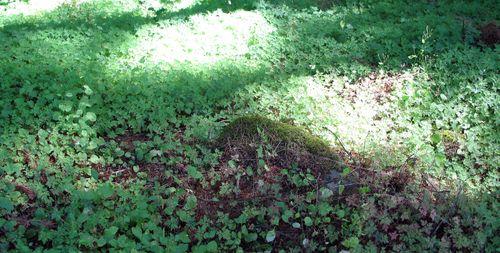 Garden,funeral,portland,hood river_0923_edited-1