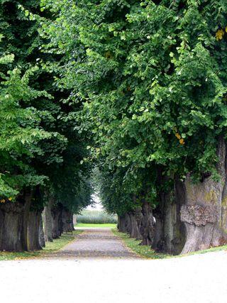 Sweden 2009 042
