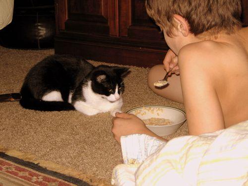 Katten stuga, and play_2236-1