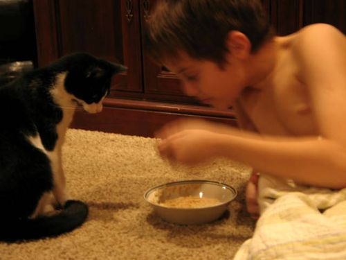 Katten stuga, and play_2231-1