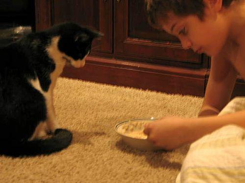 Katten stuga, and play_2232