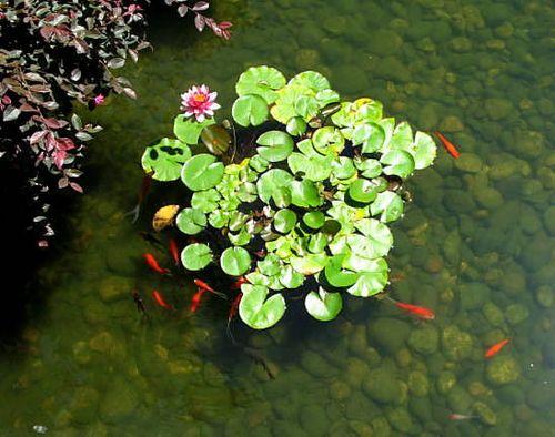 Garden,funeral,portland,hood river_0802