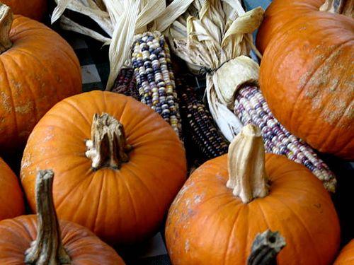 Pumpkins_2366