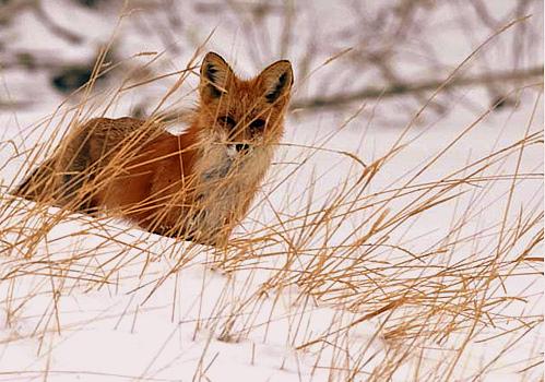 Blog fox 6