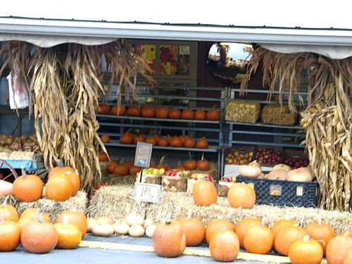 Pumpkins_2364
