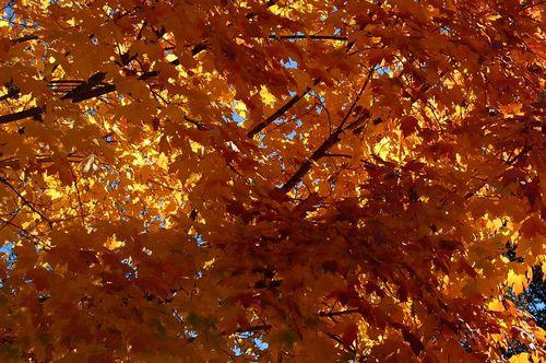 Fall2009_2723