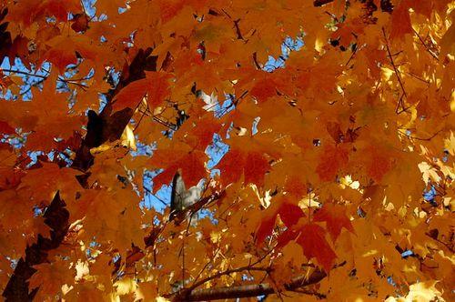 Fall2009_2732