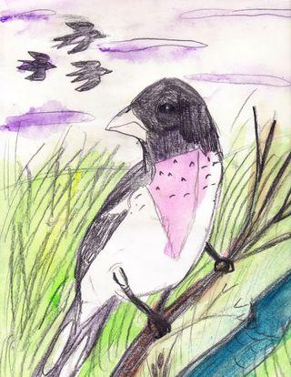 Olivia's bird